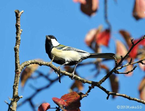 vol23. 広瀬川・青葉山近郊の野鳥―2