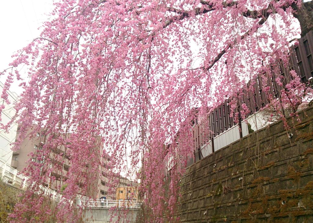 【実施報告】堀dayさんぽ~堀なか歩き~が開催されました!(六・七郷堀サポーターズ)